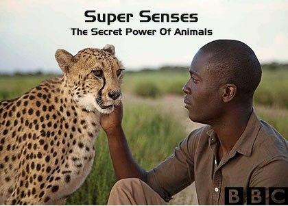 Super Senses دانلود فصل اول مستند نیروهای خارق العاده حیوانات
