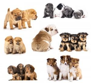 دانلود فیلم آموزش تربیت سگ های خانگی